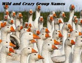 WILD & CRAZY GROUP NAMES!